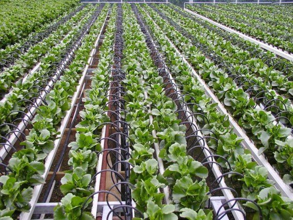 Agriculture IoT and Robots