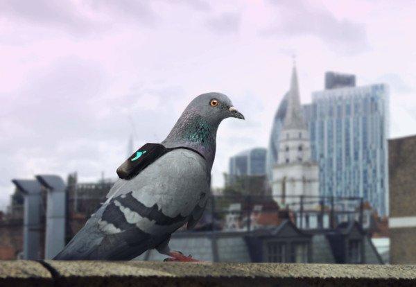 IOT-enabled pigeons