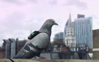 IOT-enabled pigeons